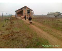 Vand teren intravilan in Com. Ciorogarla